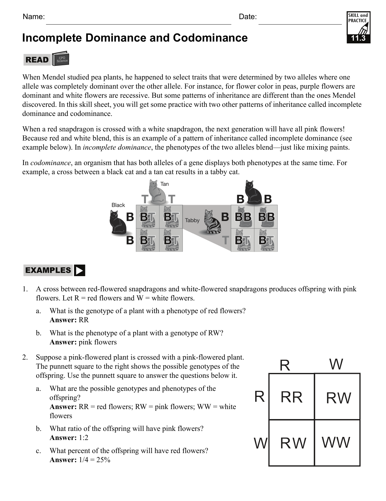 worksheet Incomplete Dominance And Codominance Worksheet incomplete dominance and codominance hrsbstaff home page