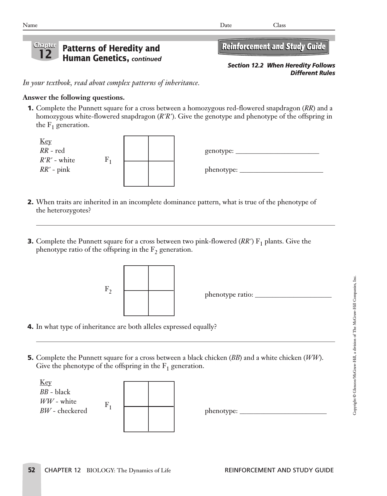 Punnett Square Worksheet 2 Answer Key – Monohybrid Cross Worksheet