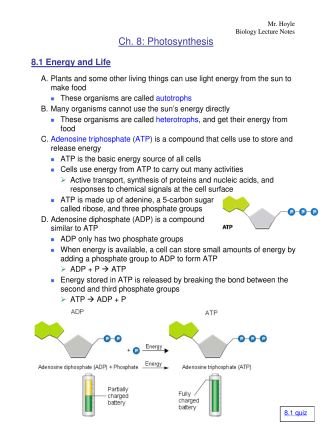 Ch. 8: Photosynthesis - Mr. Hoyles Science Page