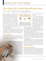 Read the full article - iBird