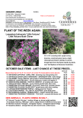 LA Weekly Availability and Specials - Grandiflora