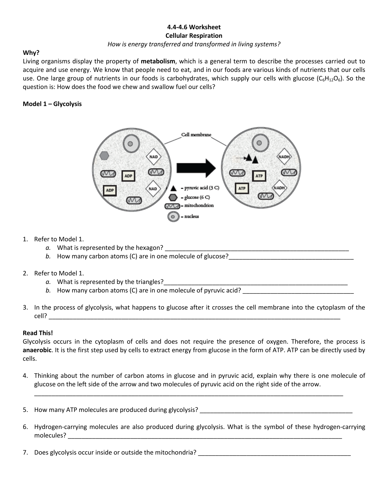 4.4-4.6 Worksheet Cellular Respiration How is energy transferred